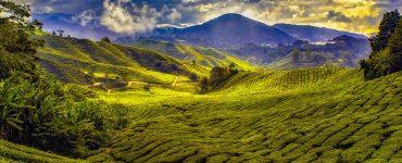 Lush green mountains in Malaysia